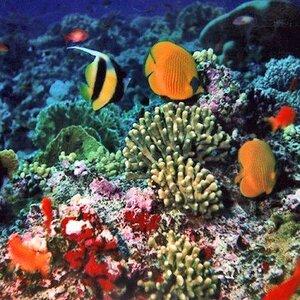 KevMic Diving image 1