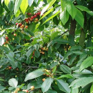Fruitteeltbedrijf Siem Entius image 4