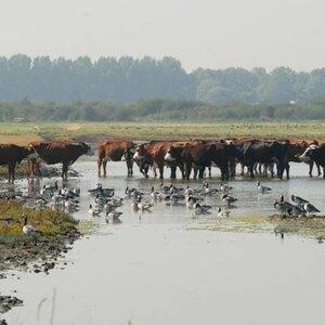 Zorgboerderij Dijkgatshoeve image 3