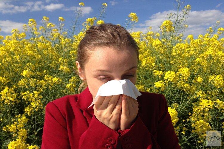 Bloeiende berk veroorzaakt zware tijden voor hooikoortspatiënten