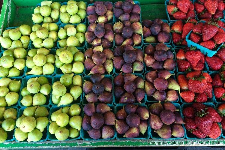 Jolanda Letter, Can'S Fruit zoekt personeel