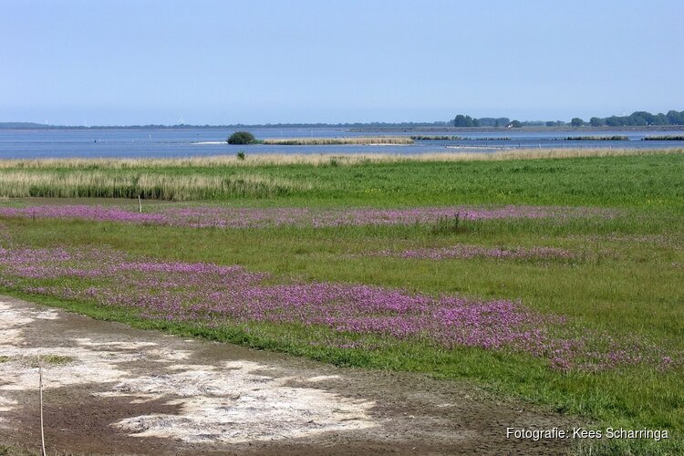 De Verzakking, een gebied met bijzondere flora