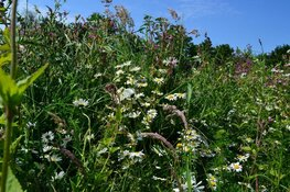 Zorgen voor meer bijen in Hollands Kroon
