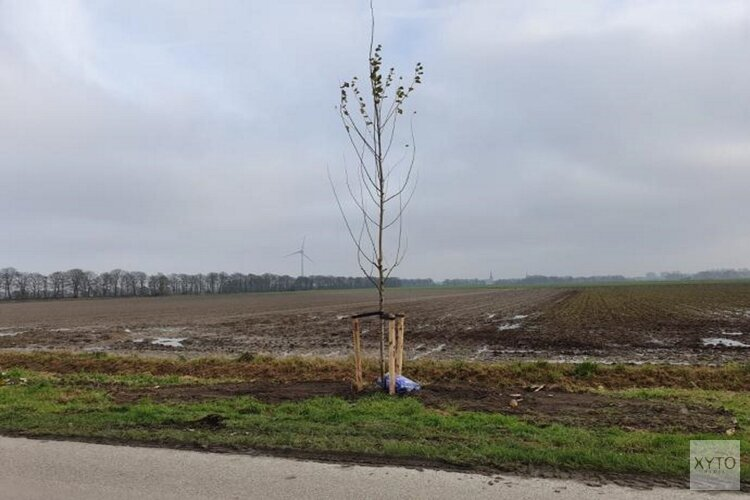 Planten bomen in volle gang