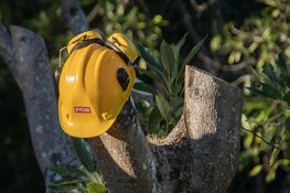 Stoop start met snoeien van bomen