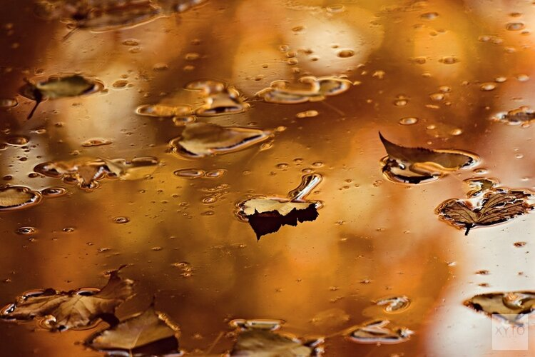Typisch herfstweer, eind van de week een stuk koeler