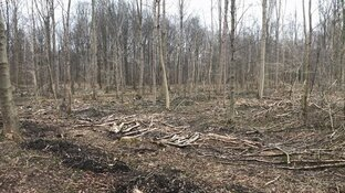 Start aanleg windmolenpark Robbenoordbos: tientallen bomen moeten wijken voor windturbines
