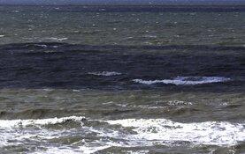 "Trotse redders Wieringer visserman terug in haven Den Oever: ""Bloid as blik!"""